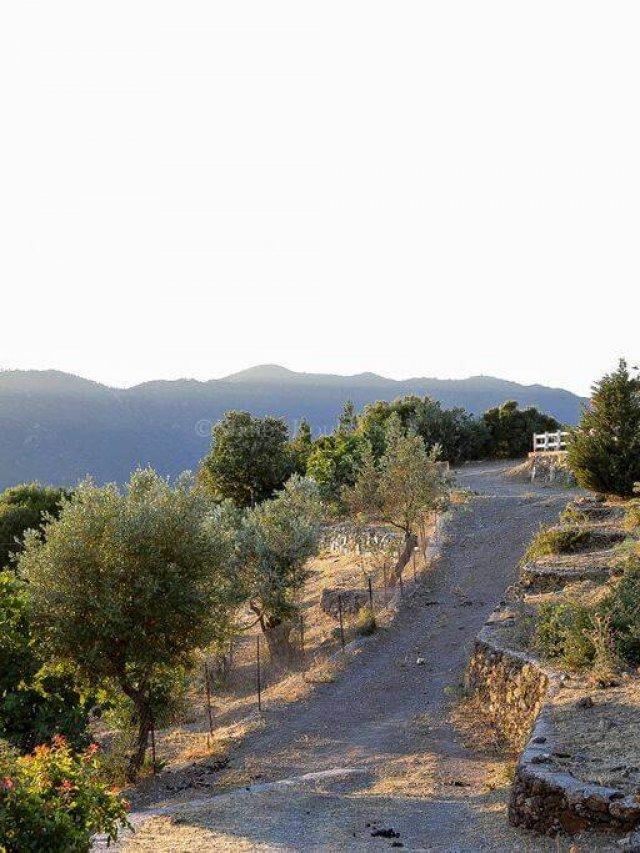 Toumba Eco Farm Guesthouses